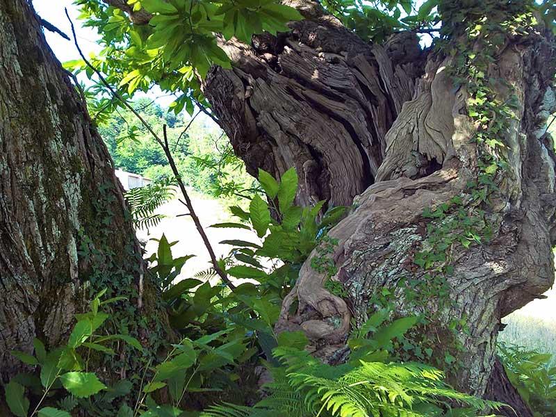 21 - Luminasio: borghi antichi e paesaggi (SOSPESO)
