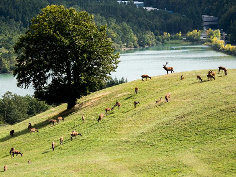 15 - Suviana: un lago tra i monti