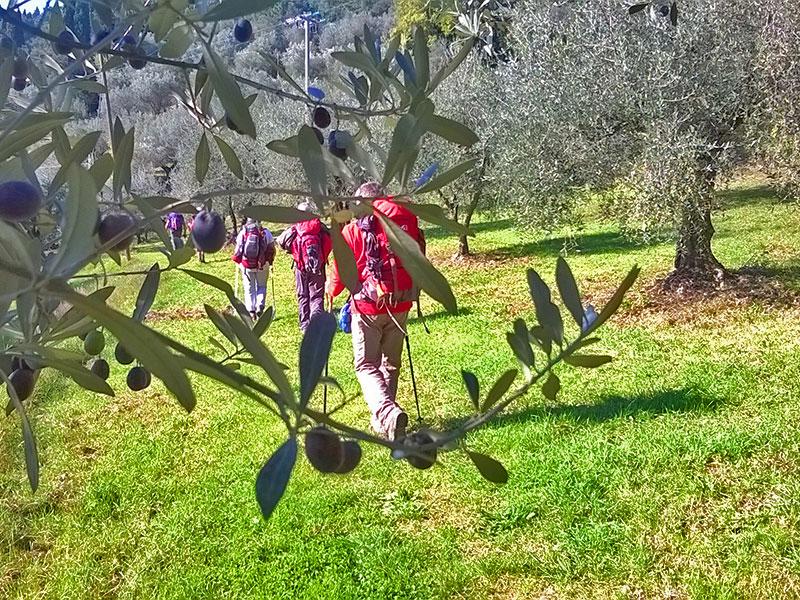 23 - Viti e ulivi in Valsamoggia